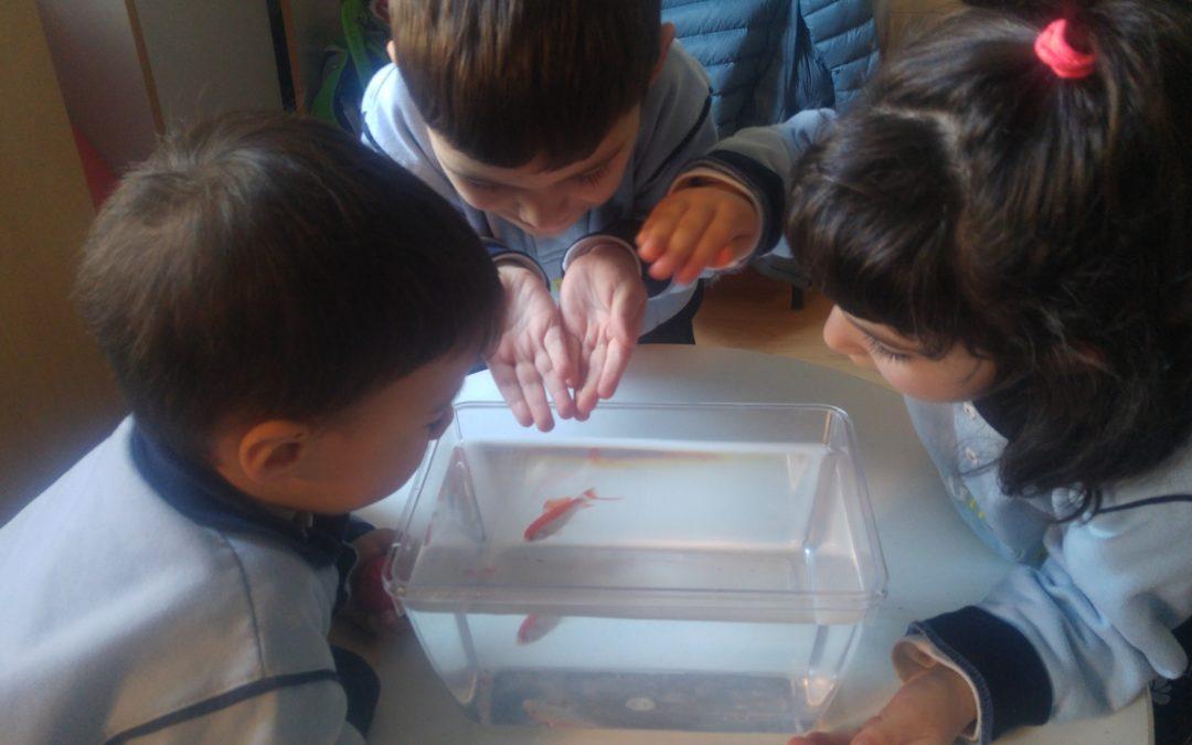 Descobrim el món dels peixos!!