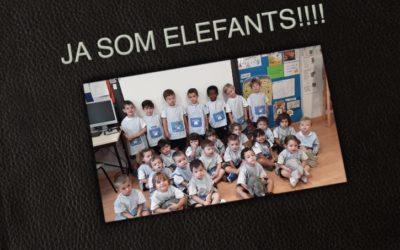 Ja som els elefants!!
